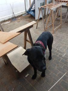 Hund hilft beim Bauen.