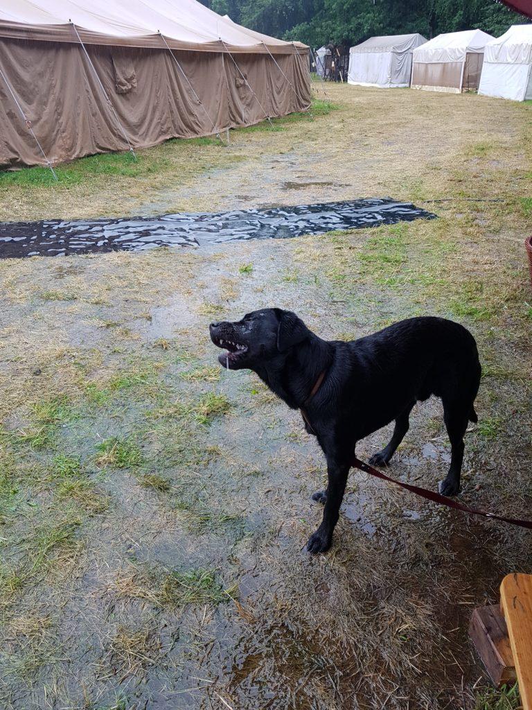 Hund im Regen vor dem orientalischen Badehuas